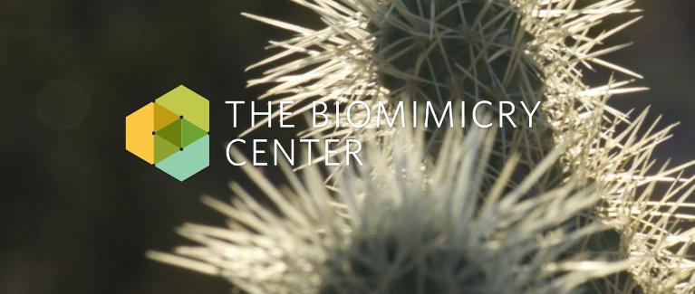 Headlines Biomimicry 38